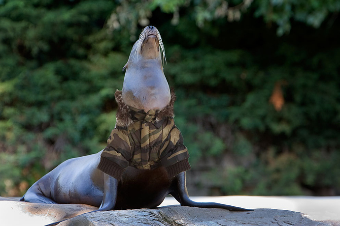 seal with parka